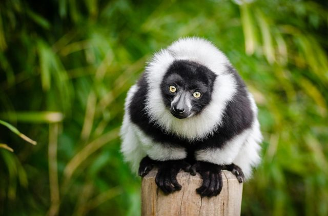 Séjour à Madagascar: les plus beaux paysages de l'île